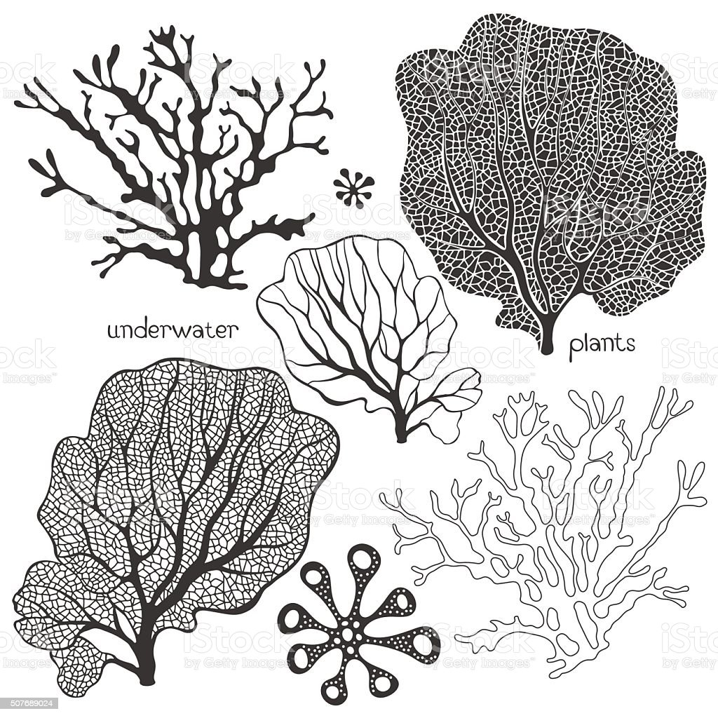Set of cartoon underwater plants. Vector isolated corals and algae. vector art illustration