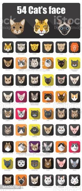 Set of cat flat icons vector illustration vector id544002154?b=1&k=6&m=544002154&s=612x612&h=dhw1mhw1t4im8mopdg3ytm v4lihzmcapmpvbosdxfk=