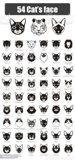 Set of cat flat icons vector illustration vector id588387612?b=1&k=6&m=588387612&s=612x612&h=kfv ar8pc t9rvmjzoiiepof8qhfp1myodc66nugzcg=