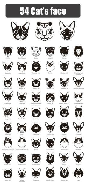 illustrazioni stock, clip art, cartoni animati e icone di tendenza di set of cat flat icons, vector illustration - ocicat