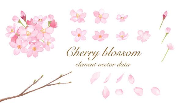 桜の要素-水彩イラストトレースベクターのセット - 桜点のイラスト素材/クリップアート素材/マンガ素材/アイコン素材