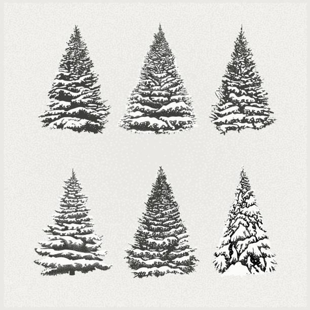 bildbanksillustrationer, clip art samt tecknat material och ikoner med uppsättning av julgranar - ädelgran