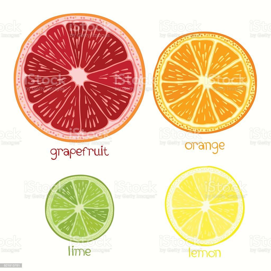 Set of citrus fruit - grapefruit, orange, lime and lemon. vector art illustration