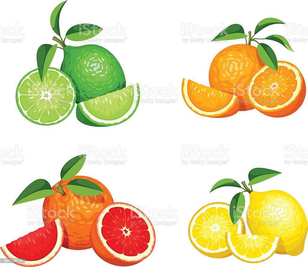Set of citrus fruits isolated on white. Vector illustration. vector art illustration