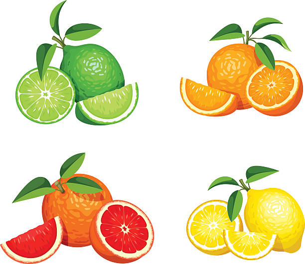Set of citrus fruits isolated on white. Vector illustration. Vector set of citrus fruits (oranges, lemons, grapefruits and limes) isolated on a white background. lime stock illustrations