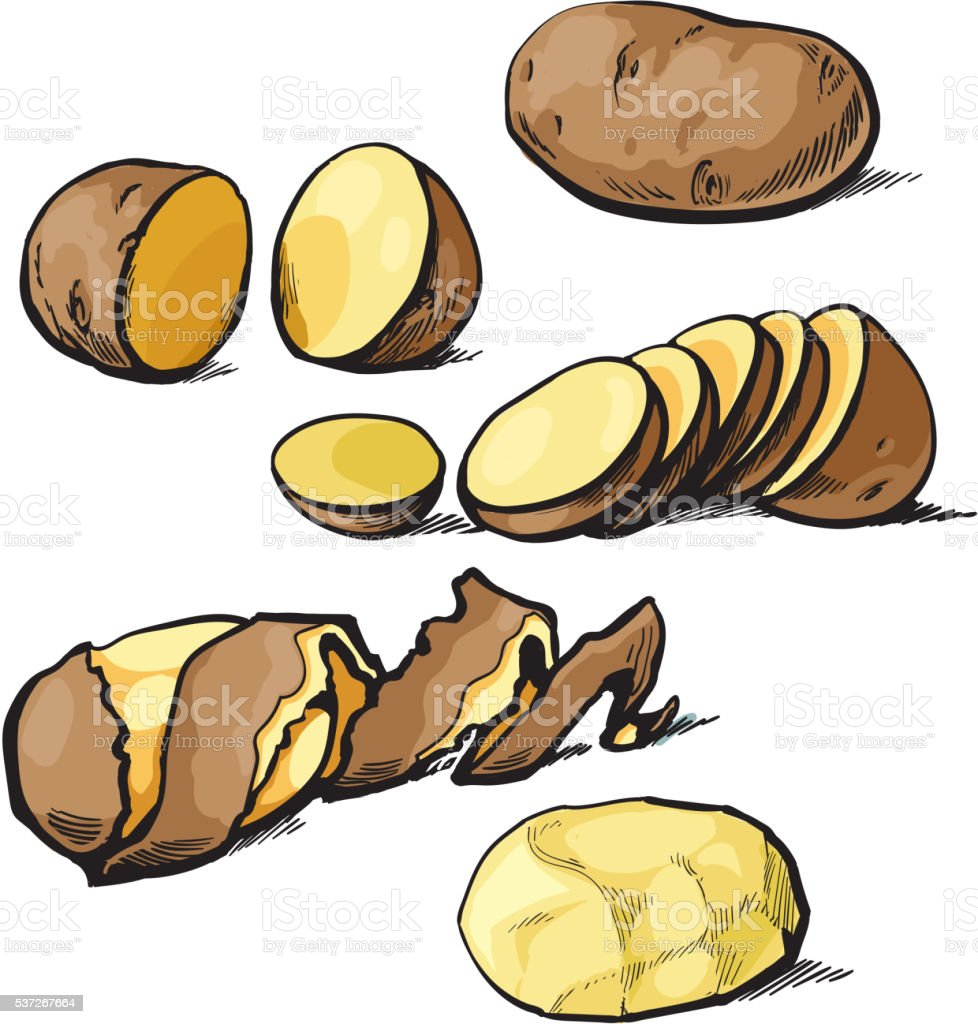 Set of cleaning potatoes and cut vector art illustration