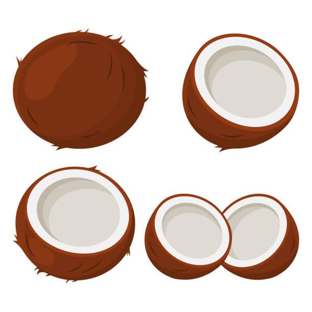 ilustrações, clipart, desenhos animados e ícones de conjunto de coco. ilustração vetorial - coqueiro