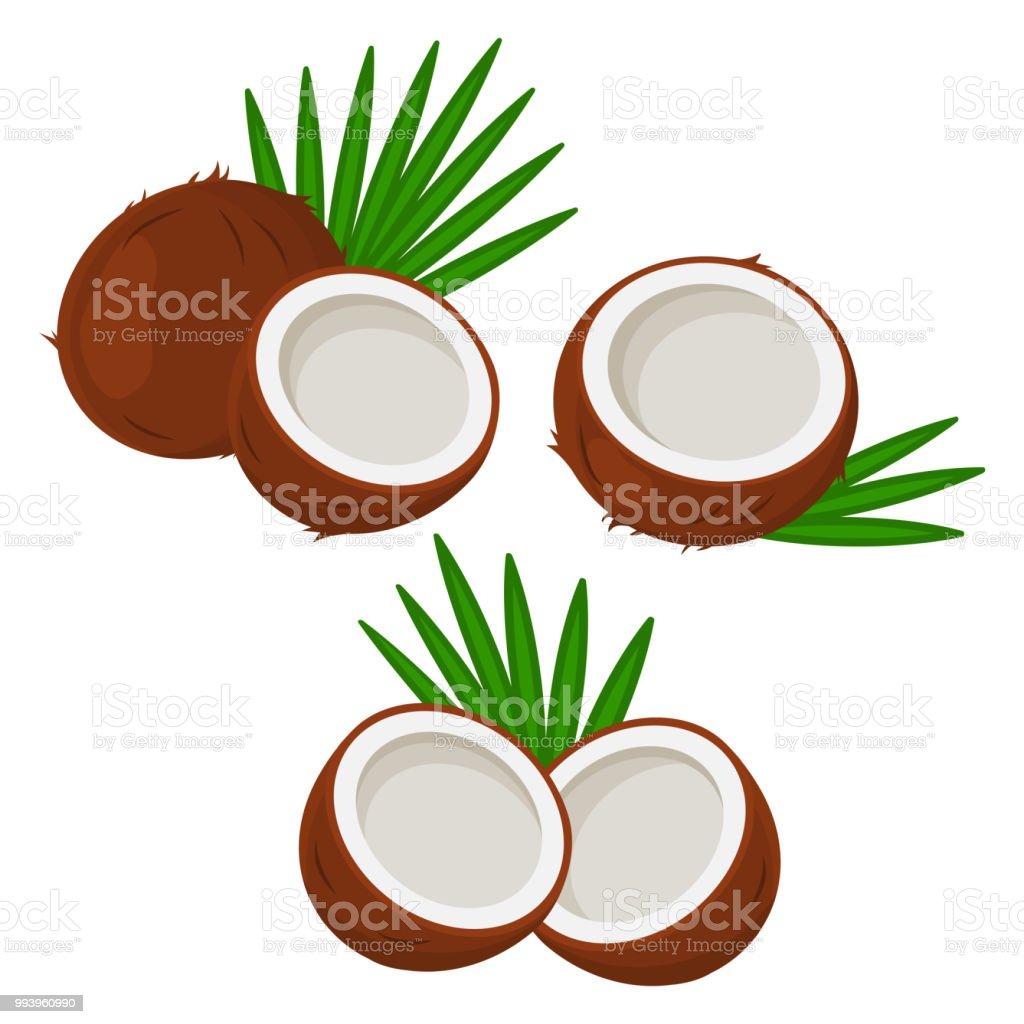 Juego de coco con las hojas. Ilustración de vector - ilustración de arte vectorial