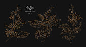 Set of coffee tree branch. Vector