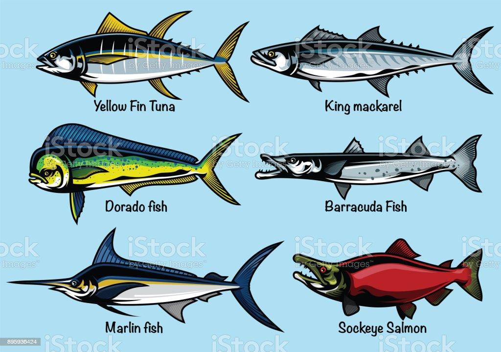 set of colored fish illustration vector art illustration