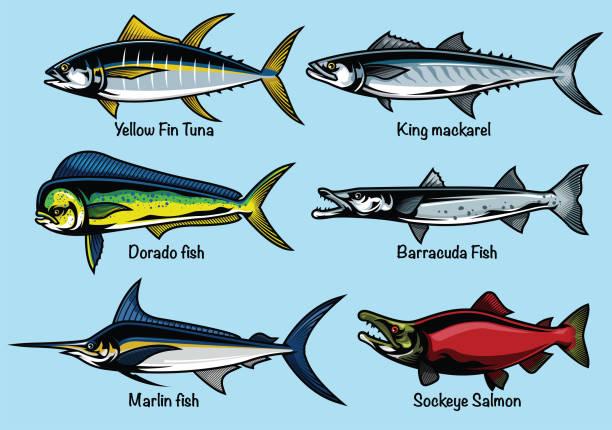 reihe von farbigen fisch abbildung - funktionsjacke stock-grafiken, -clipart, -cartoons und -symbole