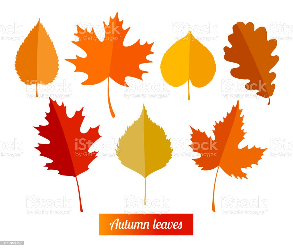 Set of colorful autumn leaves. vector art illustration