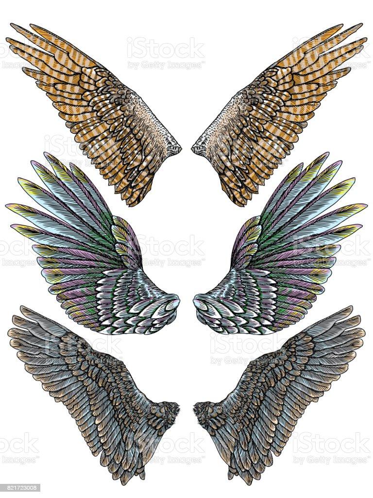 分離開位置に別の形のカラフルな鳥の羽のセット。天使の羽とカラフルなイラスト集です。フリーハンドでの描画。手タトゥー ヴィンテージ体芸術概念ベクトルを描画します。 ベクターアートイラスト