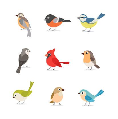 Set Of Colorful Birds Isolated On White Background — стоковая векторная графика и другие изображения на тему Без людей