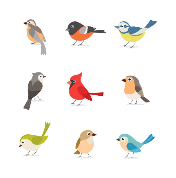 ilustrações de stock, clip art, desenhos animados e ícones de set of colorful birds isolated on white background - pássaro