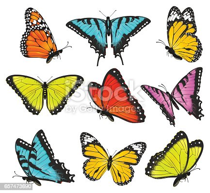 Set of colorful butterflies vector illustration