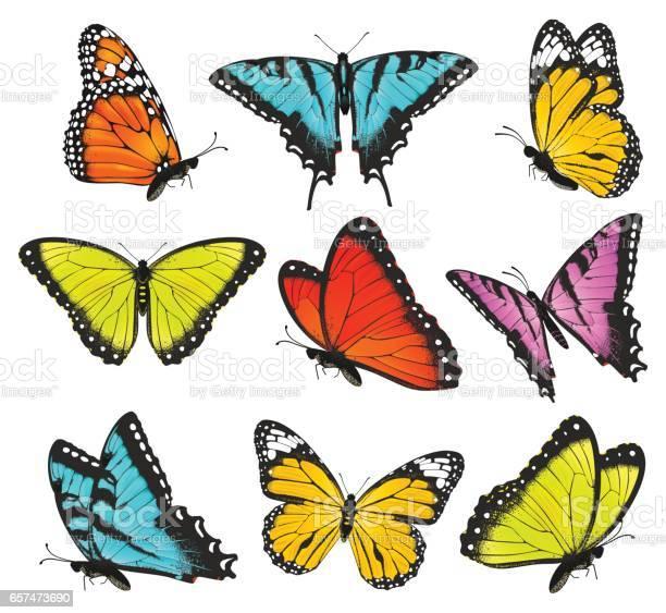 Set of colorful butterflies vector illustration vector id657473690?b=1&k=6&m=657473690&s=612x612&h=mn15f1dh6 ikaudlq4i e b2fxgkgfa1adg1efnxr6s=