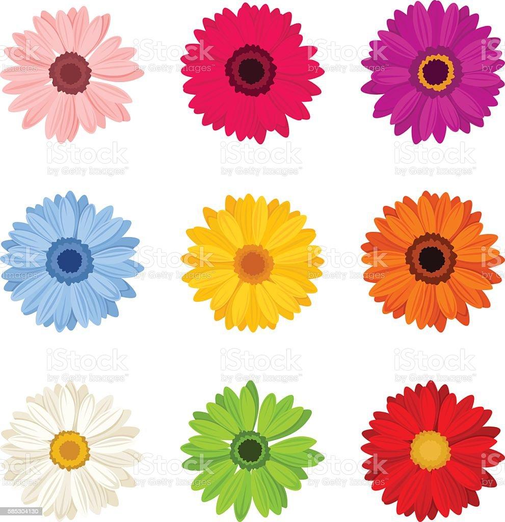 Set of colorful gerbera flowers. Vector illustration.