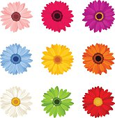 Vector set of nine colorful gerbera flowers isolated on a white background.
