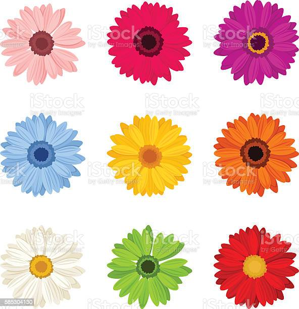 Set of colorful gerbera flowers vector illustration vector id585304130?b=1&k=6&m=585304130&s=612x612&h=7f6rgeubhrato qryvkexupd0ysto0f8vfhhewn3nd8=