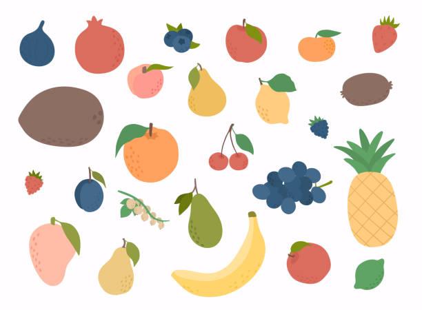 ilustrações, clipart, desenhos animados e ícones de conjunto de frutas coloridas de desenho de mão. frutas doces tropicais e ilustração de frutas cítricas. conjunto vetor de frutas frescas. - fruit salad
