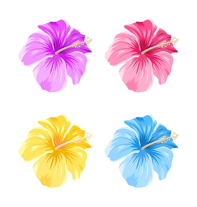 Set of Colorful Hibiscus Flowers Blossom Isolated