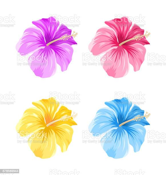 Set of colorful hibiscus flowers blossom isolated vector id578589944?b=1&k=6&m=578589944&s=612x612&h=9 ao55zmpugg8btgv0zjru3fe3j8yugrmeudtsmtco0=