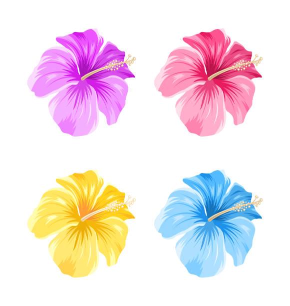 set of colorful hibiscus flowers blossom isolated - hibiskusgarten stock-grafiken, -clipart, -cartoons und -symbole