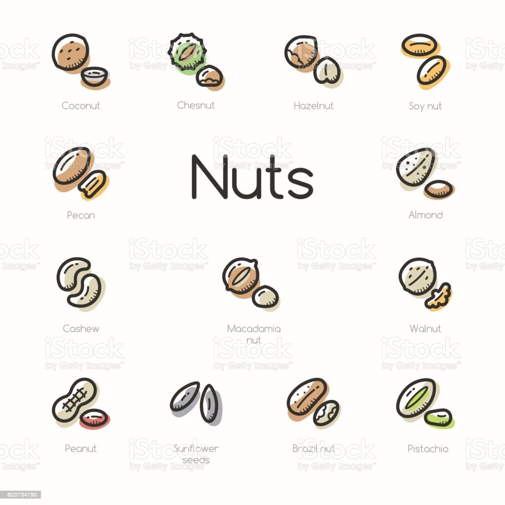 Set of colorful nuts icons vector art illustration