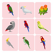 Colorful collection of parrot icons. Tropical bird pet symbols set isolated.