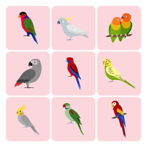 ilustrações de stock, clip art, desenhos animados e ícones de set of colorful parrot icons - bills couple
