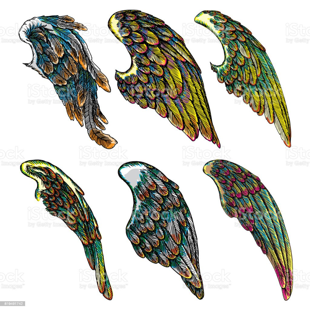 Set of colourful bird wings of different shape in open position isolated on white background. Colorful angel wings hand drawing sketch. Hipster tattoo or vintage body art concept. Vector. vector art illustration
