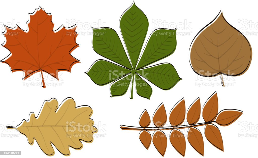 Set of colourful hand drawn leaves. Vector. vector art illustration