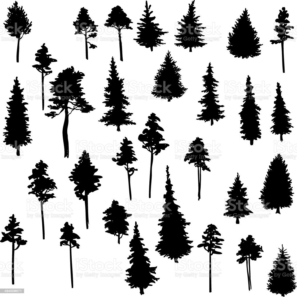 set of conifer trees vector art illustration