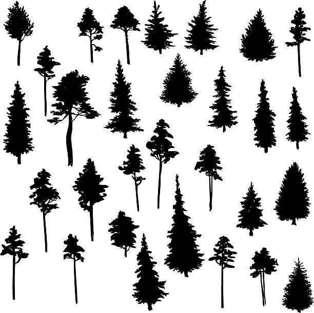 bildbanksillustrationer, clip art samt tecknat material och ikoner med set of conifer trees - gran