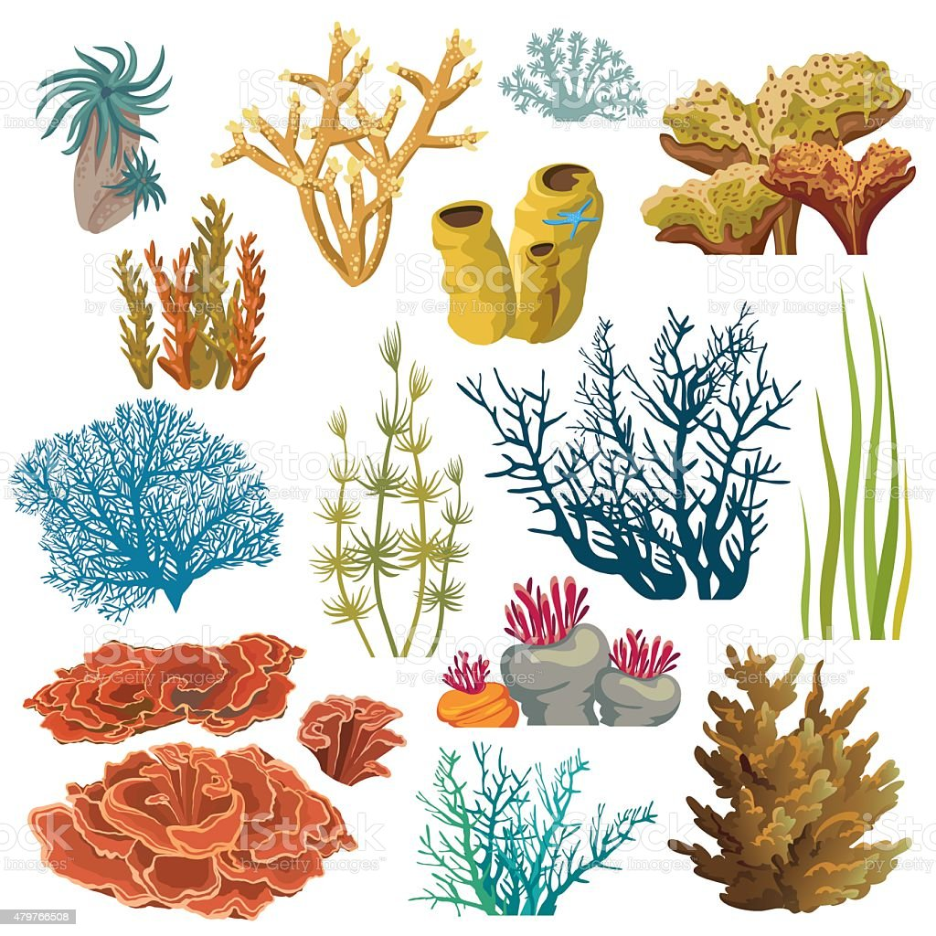 Set Of Corals And Algaes Stock Vector Art 479766508