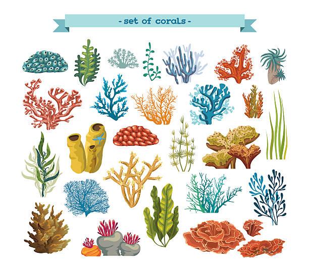 satz von korallen und einfach großartig fühlen. - algen stock-grafiken, -clipart, -cartoons und -symbole