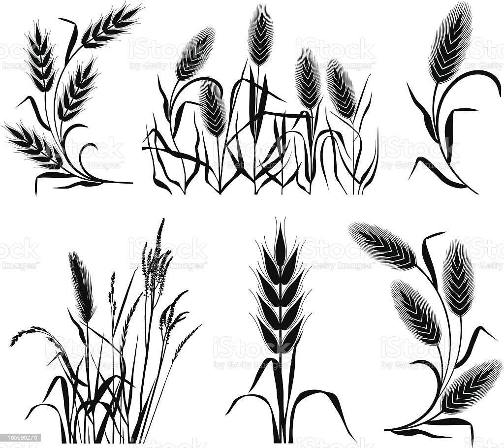 Set of corns royalty-free set of corns stock vector art & more images of agriculture