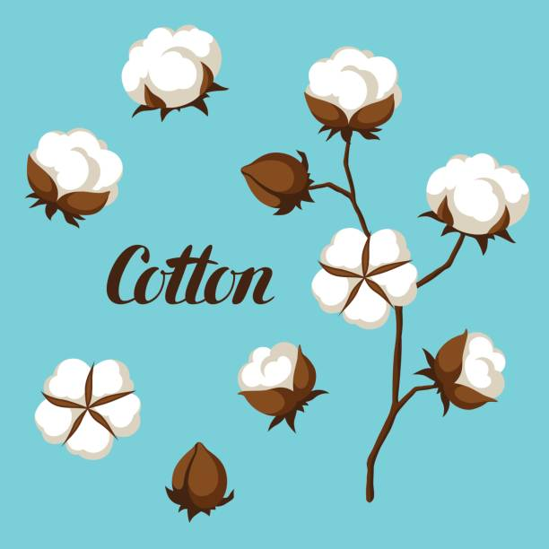 set of cotton flower buds, bolls and branch - cotton stock illustrations, clip art, cartoons, & icons