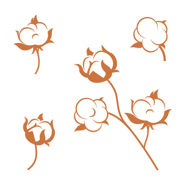 set of cotton plant flowers isolated on white background. - cotton stock illustrations, clip art, cartoons, & icons