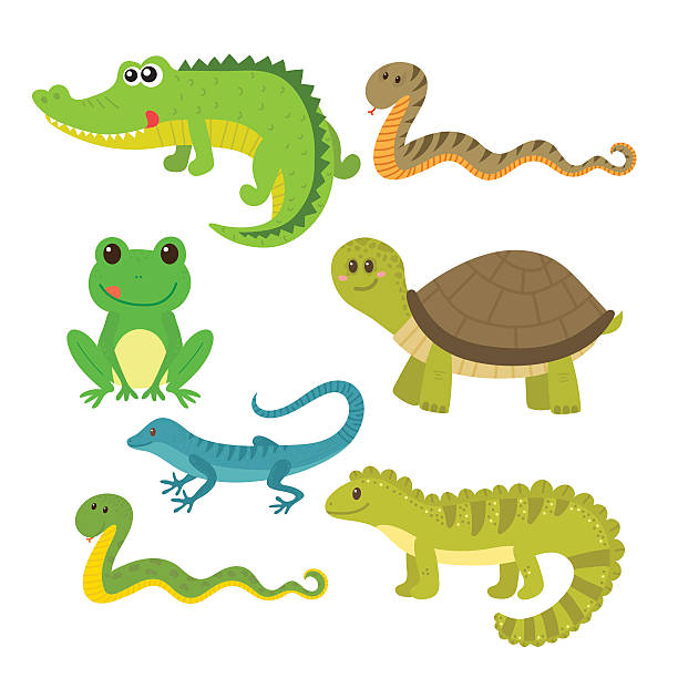 set of creeping things. wild animals - reptiles stock illustrations