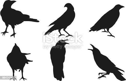 Set of crow vector on white background.Birds vector by hand drawing