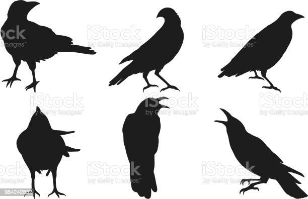 Set of crow vector on white background vector id984242832?b=1&k=6&m=984242832&s=612x612&h=zomzzvfp8mcpb5dwo w5qvss2 p5hev2gzp0uwpoiti=