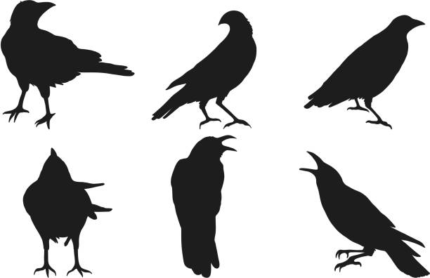Set of crow vector on white background. Set of crow vector on white background.Birds vector by hand drawing bird icons stock illustrations