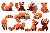 Set of cute adorable red panda in different poses cartoon design animal character flat vector style illustration on white background.