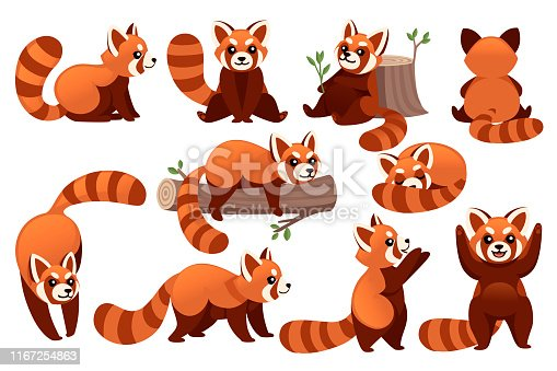 798 Red Panda Illustrations Clip Art Istock