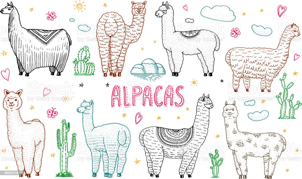 Set of cute Alpaca Llamas or wild guanaco on the background of Cactus and mountain. Funny smiling animals in Peru for cards, posters, invitations, t-shirts. Hand drawn Elements. Engraved sketch set of cute alpaca llamas or wild guanaco on the background of cactus and mountain funny smiling animals in peru for cards posters invitations tshirts hand drawn elements engraved sketch - stockowe grafiki wektorowe i więcej obrazów abstrakcja royalty-free