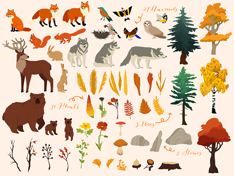 Set of cute autumn forest elements - animals, trees and other. Vector decorative cute illustration for design clipart
