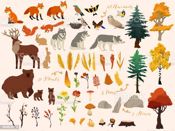 Set of cute autumn forest elements animals trees and other vector vector id859829232?b=1&k=6&m=859829232&s=612x612&h=bkt7llwugljewelefijbpygcc0qijd5hd3wdt xeqiq=