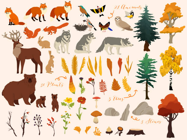 set of cute autumn forest elements - animals, trees and other. vector decorative cute illustration for design - animals stock illustrations